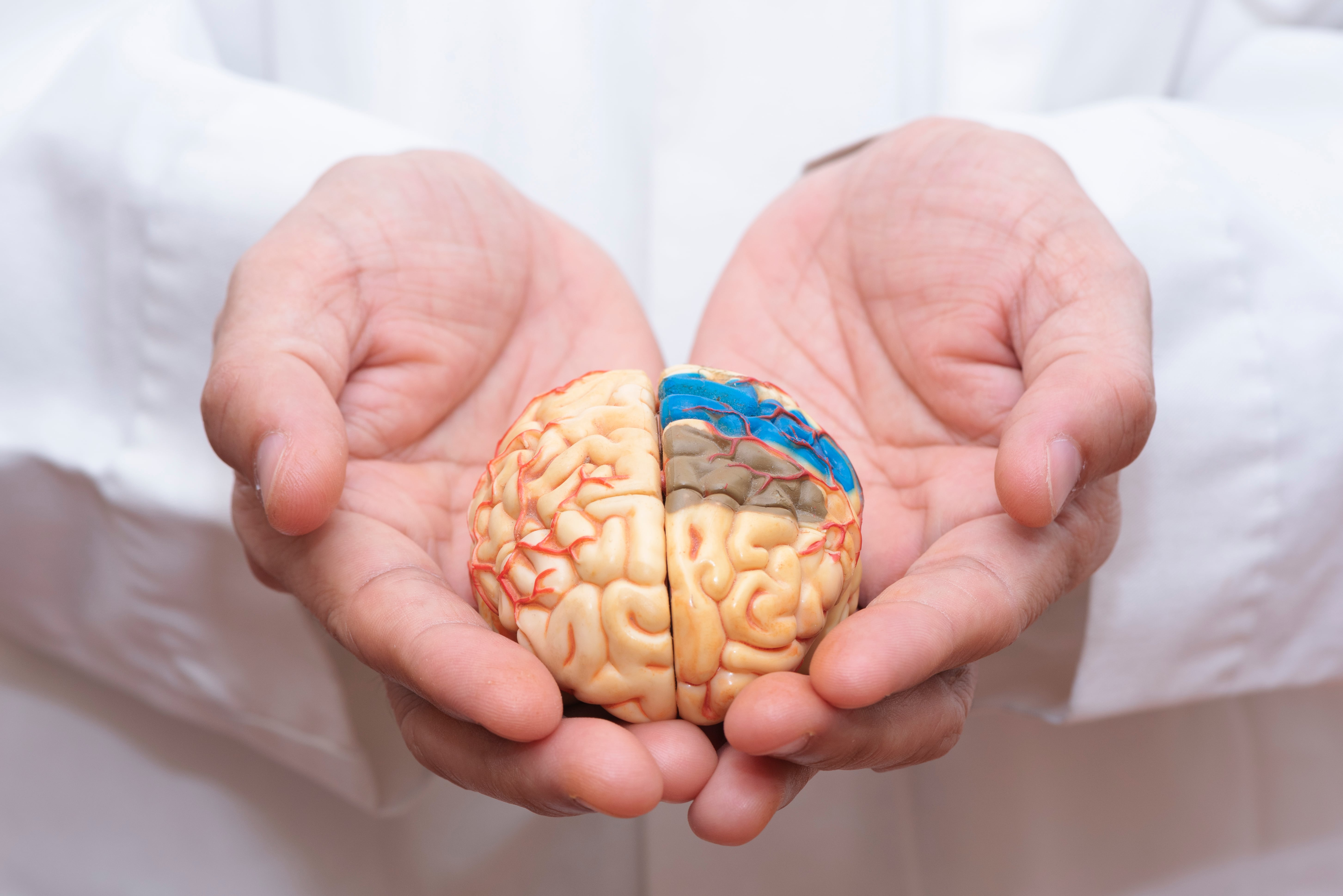 Man Holding the brain